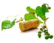 vino_ecologico.jpg
